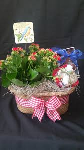 blooming plant with gifts