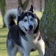 free images canine photo pet portrait vertebrate