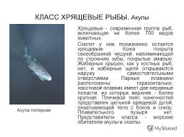 Презентация на тему Многообразие рыб Текст В Б Захаров Н И  2 КЛАСС ХРЯЩЕВЫЕ РЫБЫ