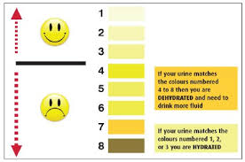 Toddler Urine Colour Chart Expert Baby Pee Color Chart Newborn Baby Poop Color Chart