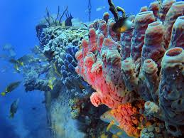 Limportanza delle spugne nel reef danireef portale dedicato