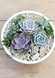 270 best succulent rock garden ideas