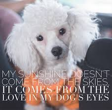 Quotes About Dogs Love Interesting 48 Relatable Dog Quotes That Will Warm Your Heart Proud Dog Mom