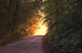 Beautiful lighting Landscape Sunlight Forest Way Path Evening Luton Today Light Images Pixabay Download Free Pictures