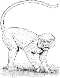 Small Picture Spider Monkey Coloring Page Coloring Home Coloring Coloring Pages