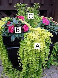 Container Gardening In India  Google Search  Beautiful Balconies Container Garden Ideas For Shade