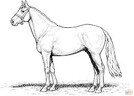 Small Picture Horse Stallion coloring page Free Printable Coloring Pages