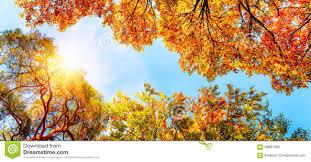 """Résultat de recherche d'images pour """"soleil d'automne"""""""