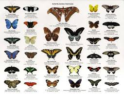 Moth Identification Chart Florida Butterfly Identification Guide Google Search