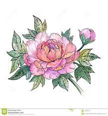 красивый цветок пиона букет пионов татуировка иллюстрация штока