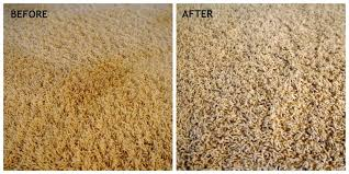 clean pet stain carpet cleaning pet stain and odor removal how to clean pet urine stains