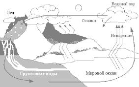 Реферат Круговорот веществ в природе Рефераты на репетирем ру Круговорот веществ в природе