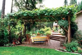 Four table grape vines grow in each corner--Himrod, Lakemont, Flame and  Concord