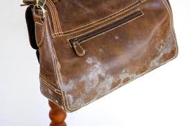 mold leather cleaning 74 amazing cleaning to clean every corner in your house best