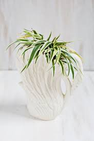 view in gallery spider plant in a swan planter