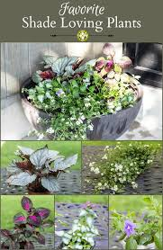 Container Garden For Shade  Creeping Jenny Impatiens  Under The Container Garden Shade Plants