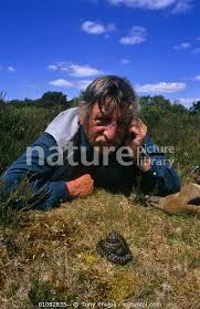 Nature Picture Library Photographer and herpetologist Tony Phelps face to  face with an Adder {Vipera berus} in Dorset, UK - Tony Phelps