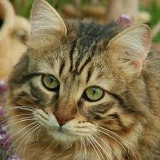 Why I Love Zyrtec for Cats   petMD