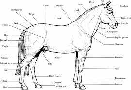 Small Picture Free Printable Horse Coloring Pages Printable Horse Coloring