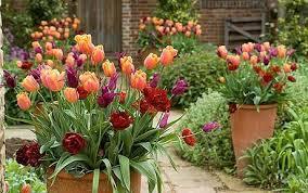 five best plants for summer pots