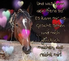 Pferdesprüche At P0nyfl0cken Instagram Profile Picdeer
