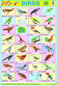 Hindi Birds Name Chart Birds Chart Hindi Poems For Kids English Classroom Learn