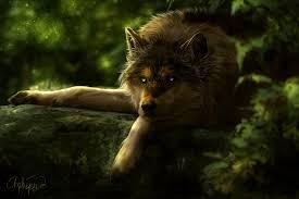 3840x2560 Wolf 4k Wallpaper Ultra Hd Animal Tokkorocom