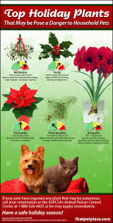 holiday toxic plants