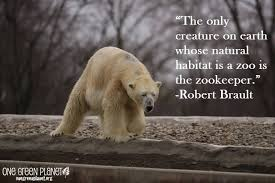 Animal Rights Quotes Mesmerizing Animal Rights Quotes Proverbs