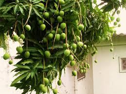 The M Blog Bearing Fruit In SeasonTree Bearing Fruit