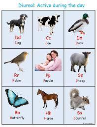 diurnal animals list for kids. Simple List Ivy Kids Kit  Night Animals Nocturnal Vs Diurnal For Animals List E