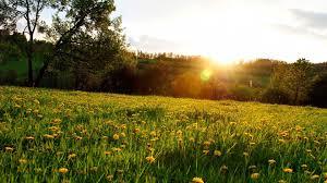 Биоценоз луга чем характеризуется описание весеннем лугу