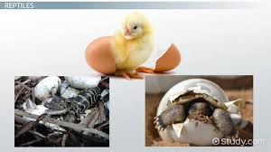 Animals That Hatch From Eggs Lesson For Kids