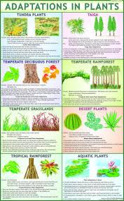 Plant Chart Adaptation In Plants Science Charts