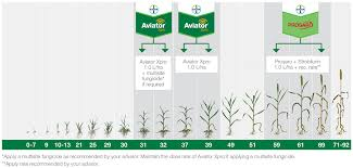Winter Wheat Growth Stages Chart Wheat Disease Watch Bayer Crop Science Nz