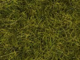 wild grass texture. 759 Wild Grass Texture