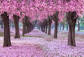 Amazon Com Lfeey 10x8ft Pink Cherry Blossom Backdrop Sweet