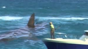 megalodon shark still alive proof 2015. Delighful Proof For Megalodon Shark Still Alive Proof 2015 S