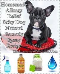 8 best Itchy dog remedies images on Pinterest in 2018 | Dog itchy ...