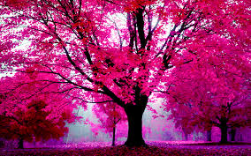 30 HD Pink Wallpapers
