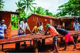Mondelez monte en puissance sur le cacao...