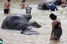 green elephant sanctuary park choeng