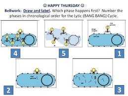 Lytic And Lysogenic Cycle Venn Diagram Simon Gipps Kent Top 10 Lytic Cycle And Lysogenic Cycle Of