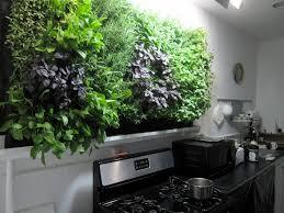 Massive kitchen wall herb garden.