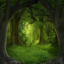 Details About 10x10ft Large Green Cave Forest Background Backdrops Studio Photo Props
