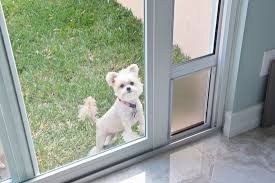 pet or doggy door considerations