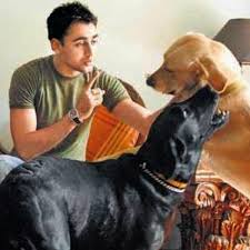 imran khan ed with his pet dogs