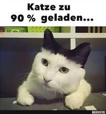 Witzig Lustige Katzen Sprüche Gute Bilder
