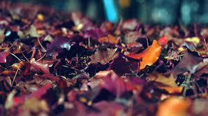 Fall Wallpaper Macbook Air