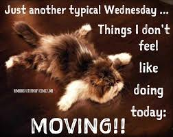 Image result for happy wednesday cats images
